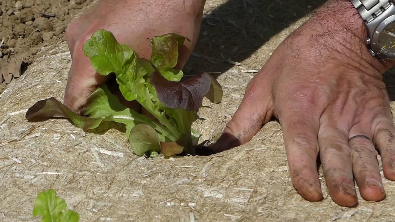 #1 Les Tutos D'herbi - Comment Poser La Toile De Paillage En Chanvre  Naturel Pour Potager Et Jardin à Rouleau Toile De Jute Jardin