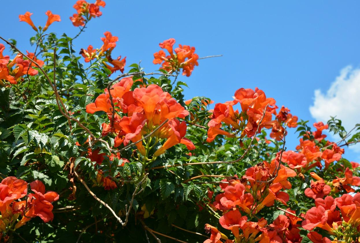 10 Fleurs Et Plantes Orange Pour Un Jardin Aux Couleurs ... concernant Faire Un Jardin Japonais Facile