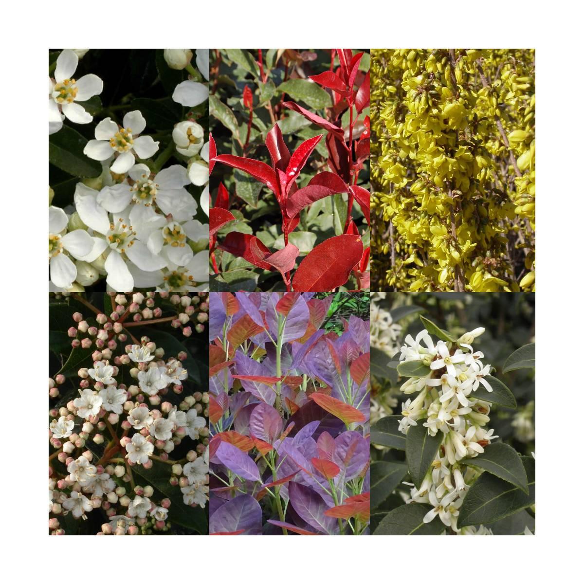 10 Mètres De Haie Fleurie - Kits Prêts À Planter - Achat Direct Au  Producteur serapportantà Jardin En Kit Pret A Planter