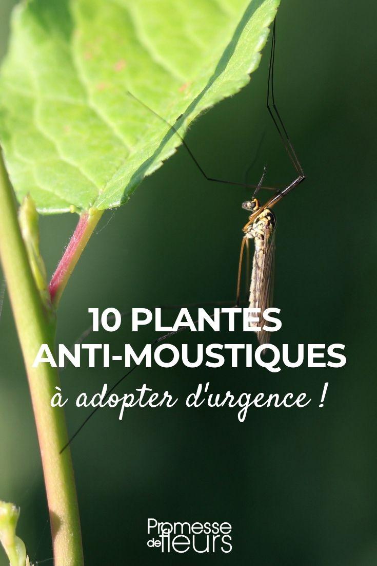 10 Plantes Anti-Moustiques | Jardins, Jardin Potager Et ... serapportantà Anti Moustique Jardin