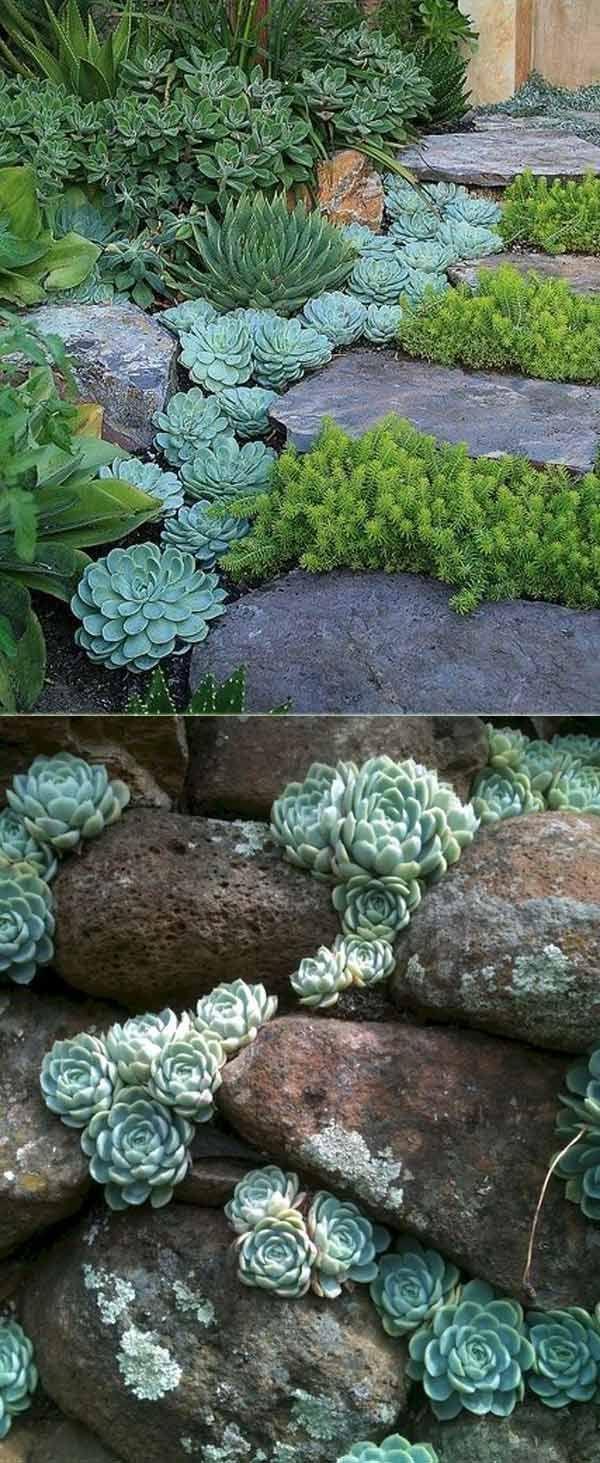 20 Idées Pour Créer Un Jardin Étonnant Succulent #amazing ... destiné Amenagement Petit Jardin Mediterraneen