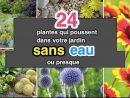 24 Plantes Qui Poussent Dans Votre Jardin Sans Eau (Ou Presque). concernant Bonne Terre Pour Jardin