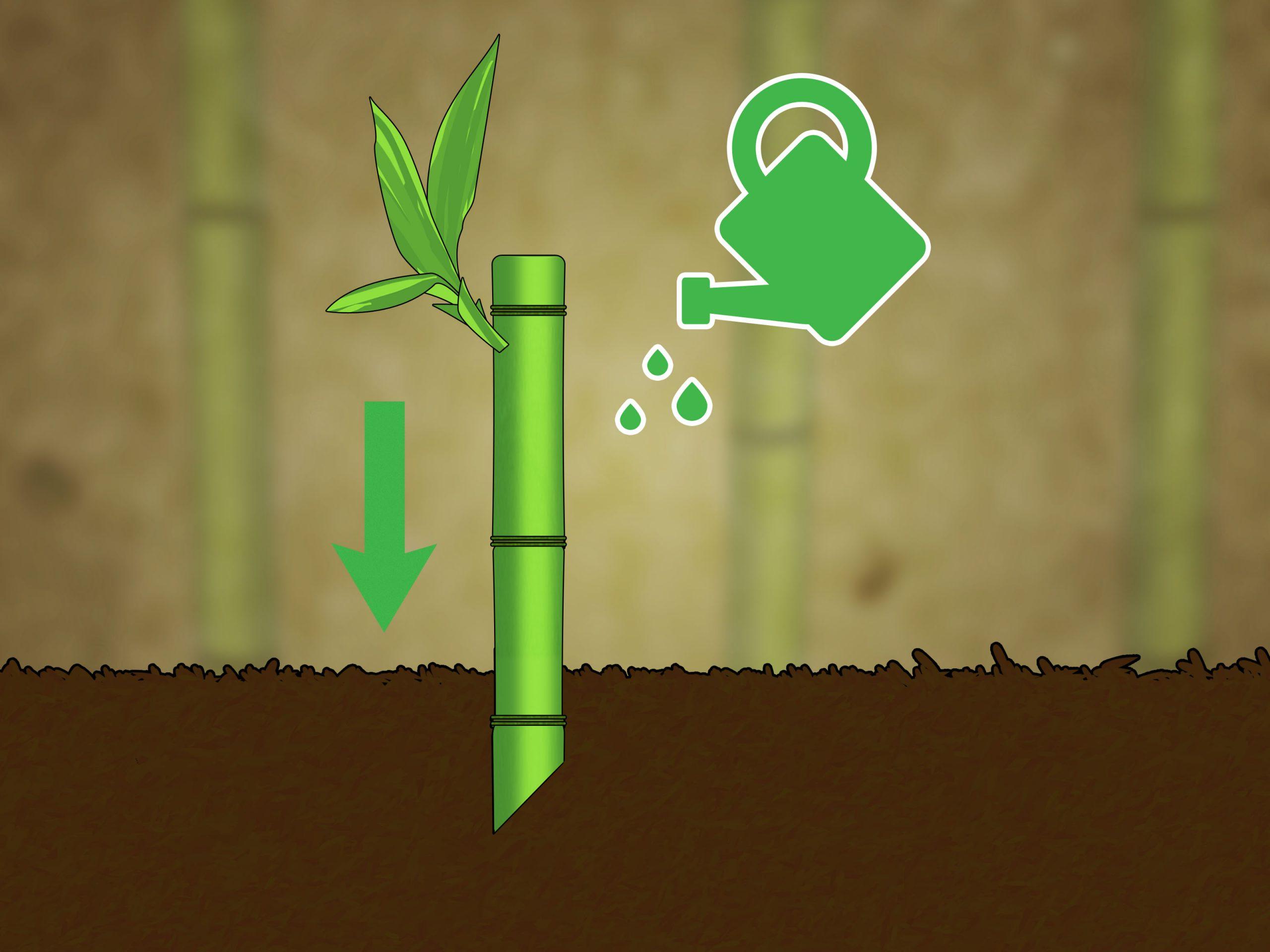 3 Manières De Couper Du Bambou - Wikihow intérieur Comment Eliminer Les Bambous Dans Un Jardin