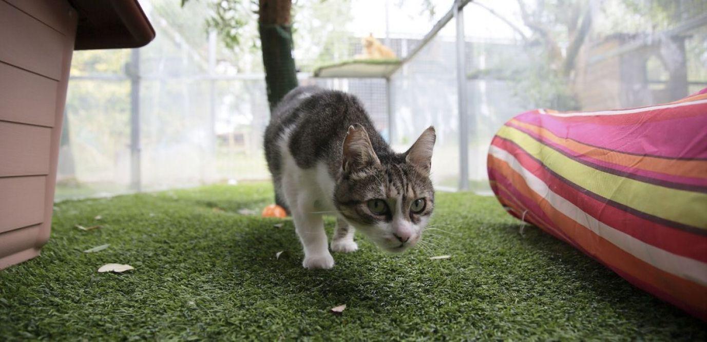 4 Astuces Pour Que Votre Chat Arrête D'exterminer La Faune encequiconcerne Chasser Les Chats Du Jardin