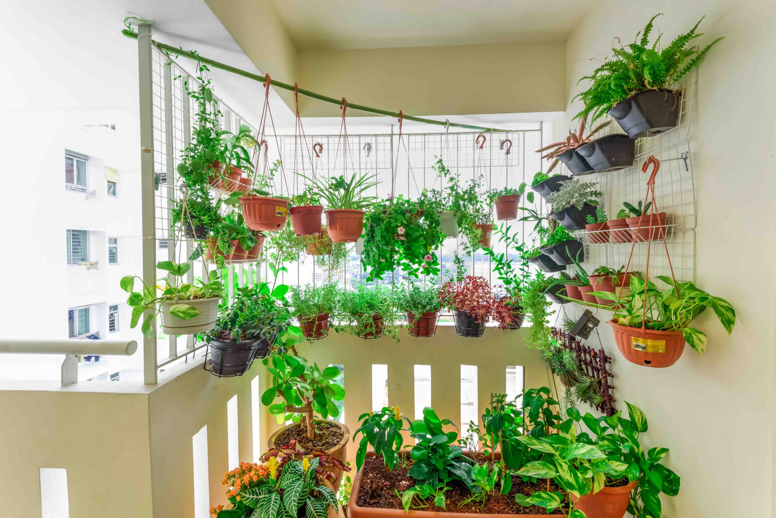 4 Conseils Pour Cultiver Des Plantes Sur Un Balcon – Du ... concernant Faire Un Jardin Sur Son Balcon