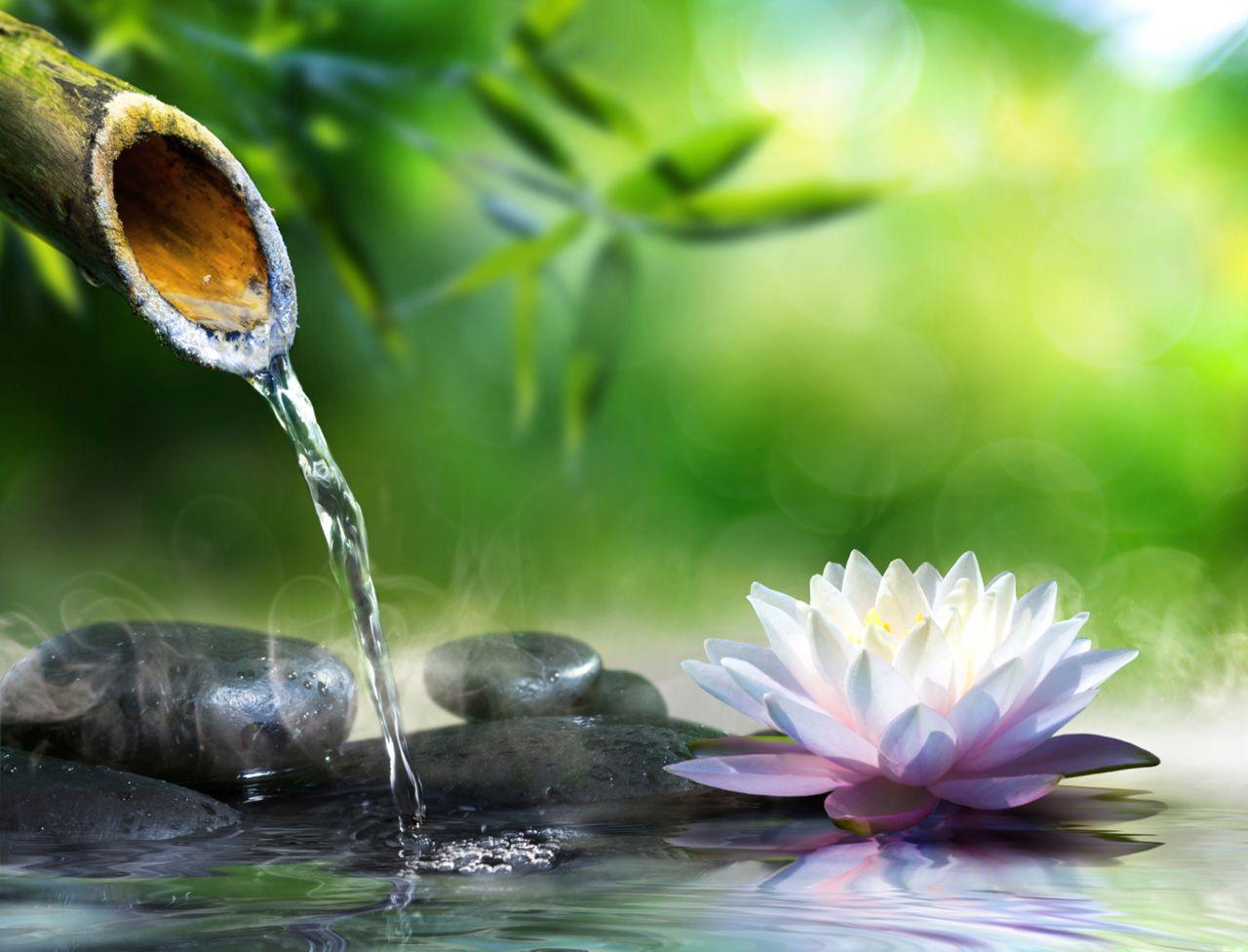 5 Idées Pour Faire Un Jardin Zen | Paysage Zen, Peinture Zen ... encequiconcerne Faire Un Jardin Zen
