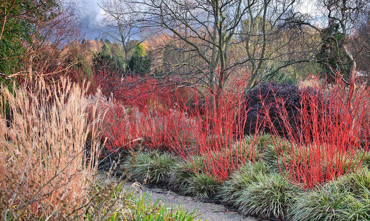 5 Idées Pour Un Jardin Beau Et Coloré En Hiver | Beaux ... encequiconcerne Ecorces Jardin