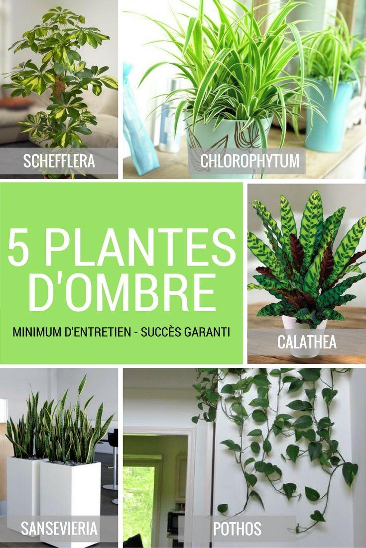5 Plantes Vertes D'ombre Pour L'intérieur | Mi Casa | Plante ... dedans Plante Jardin Ombre