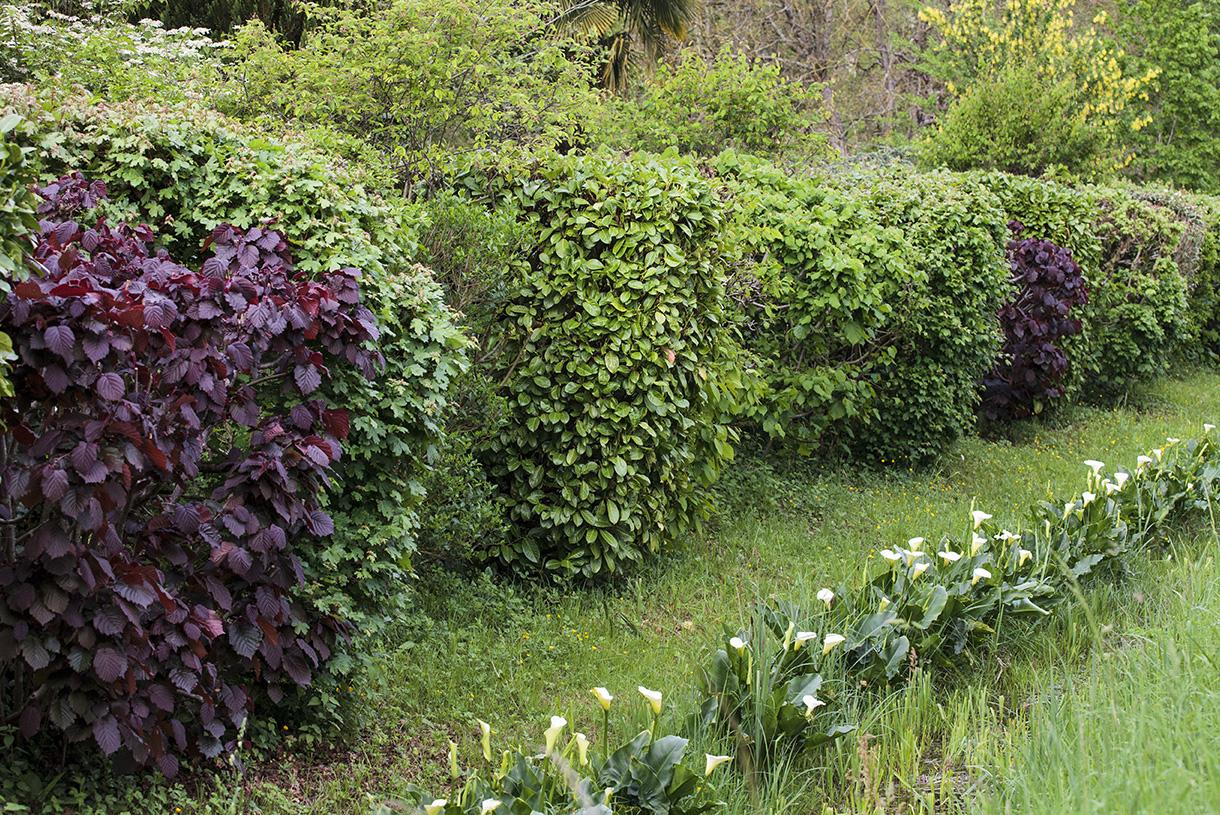 6 Gestes Essentiels Pour Booster Une Jeune Haie | Détente Jardin concernant Haie De Jardin Pousse Rapide