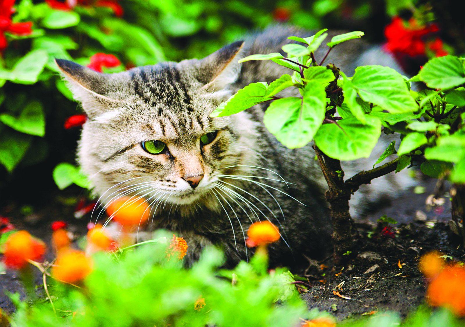 6 Trucs Pour Éloigner Les Chats De Votre Jardin - Le ... destiné Chasser Les Chats Du Jardin