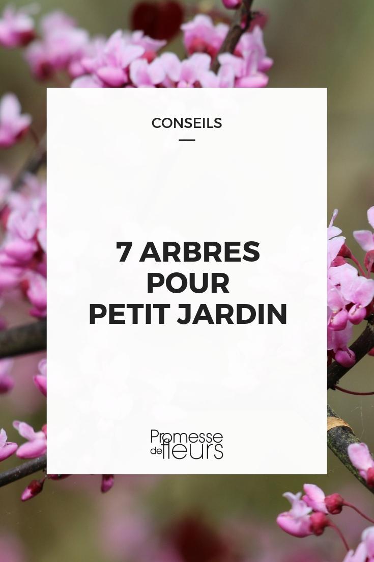 7 Arbres Décoratifs Et Parfaits En Petits Jardin - Notre ... à Arbre Pour Petit Jardin