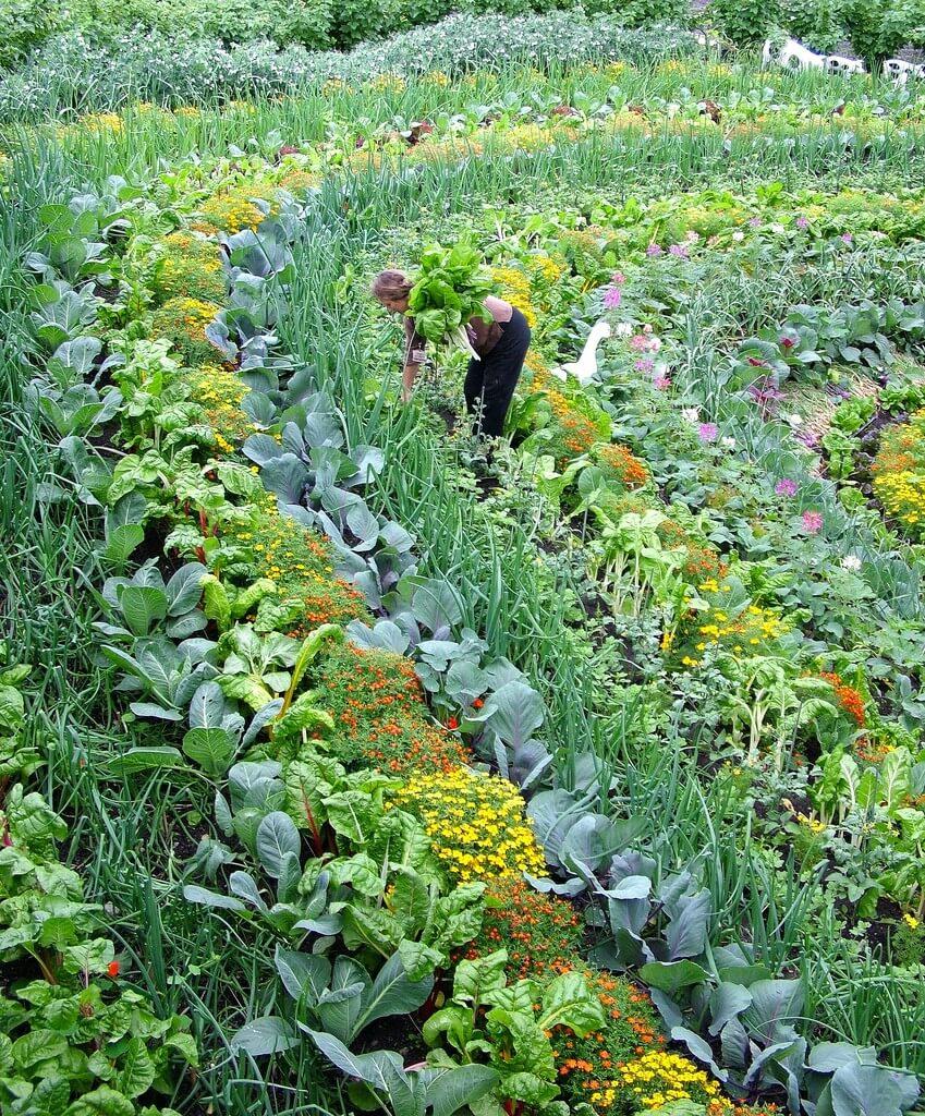 7 Étapes Pour Un Potager Au Top ! | Je Jardine Monpotdefleurs serapportantà Organisation D Un Jardin Potager