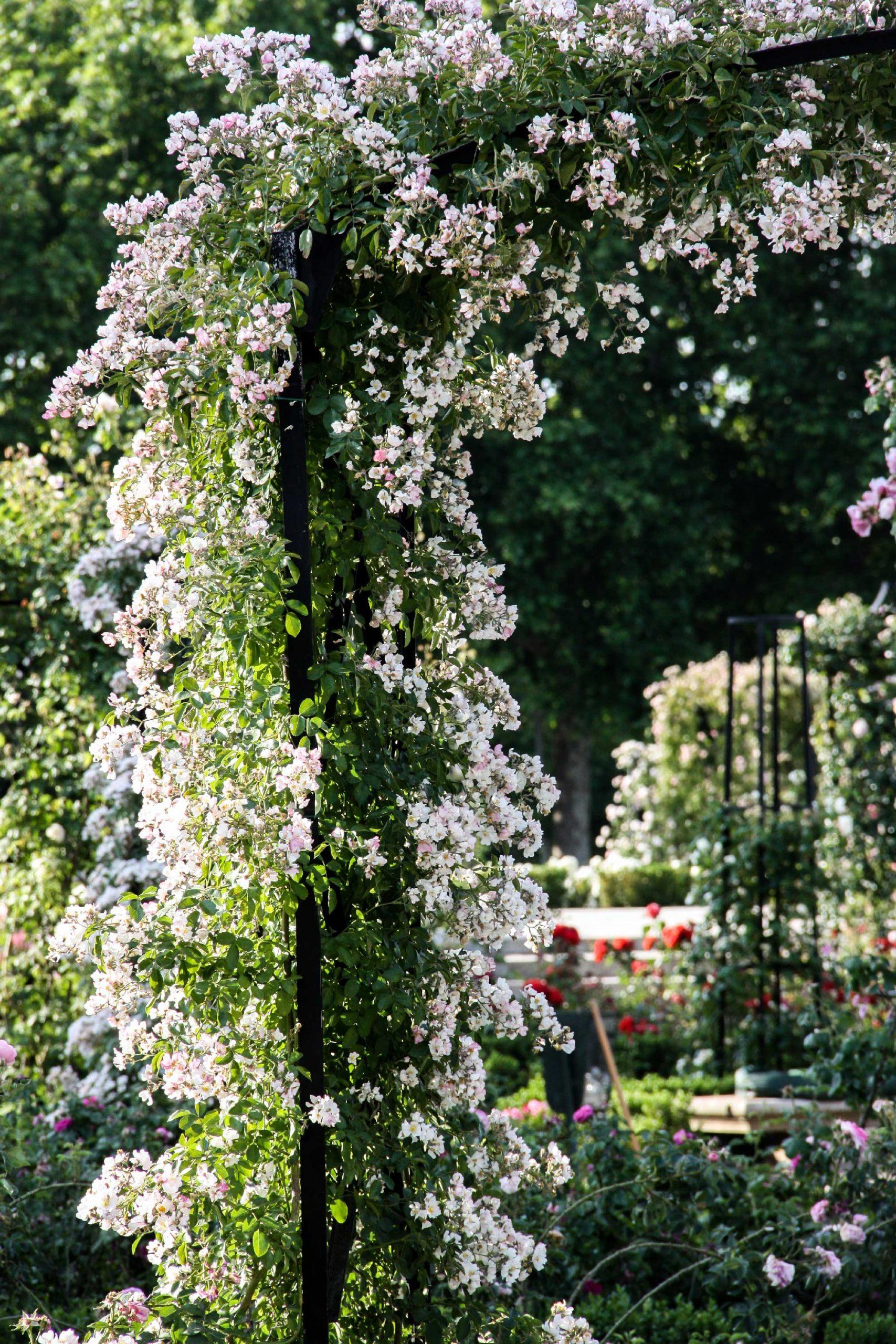 7 Idées Géniales D'aménagement De Jardin Et De Terrasse ... encequiconcerne Idée D Aménagement De Jardin