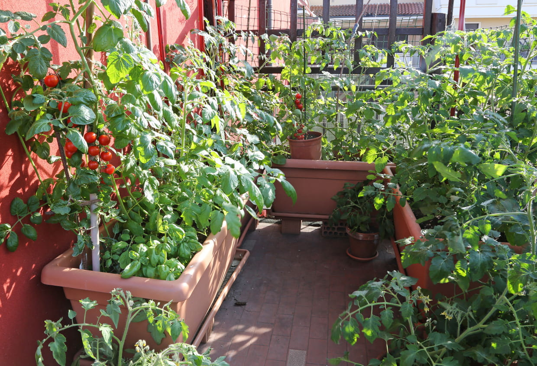 8 Légumes À Cultiver Sur Son Balcon intérieur Faire Un Jardin Sur Son Balcon
