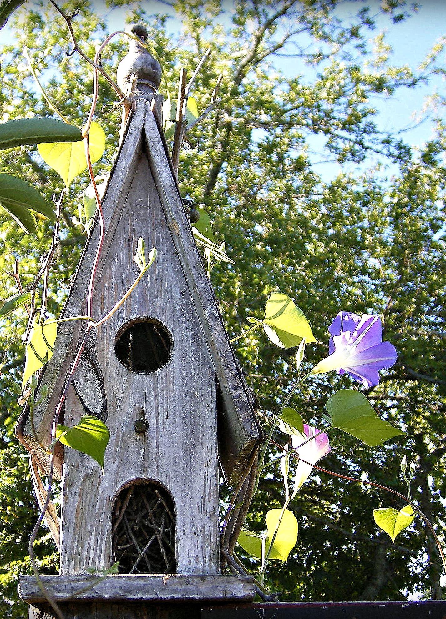 Abri Église | Maison Oiseaux, Jardin Rustique, Oiseaux Des ... à Abri Oiseau Jardin