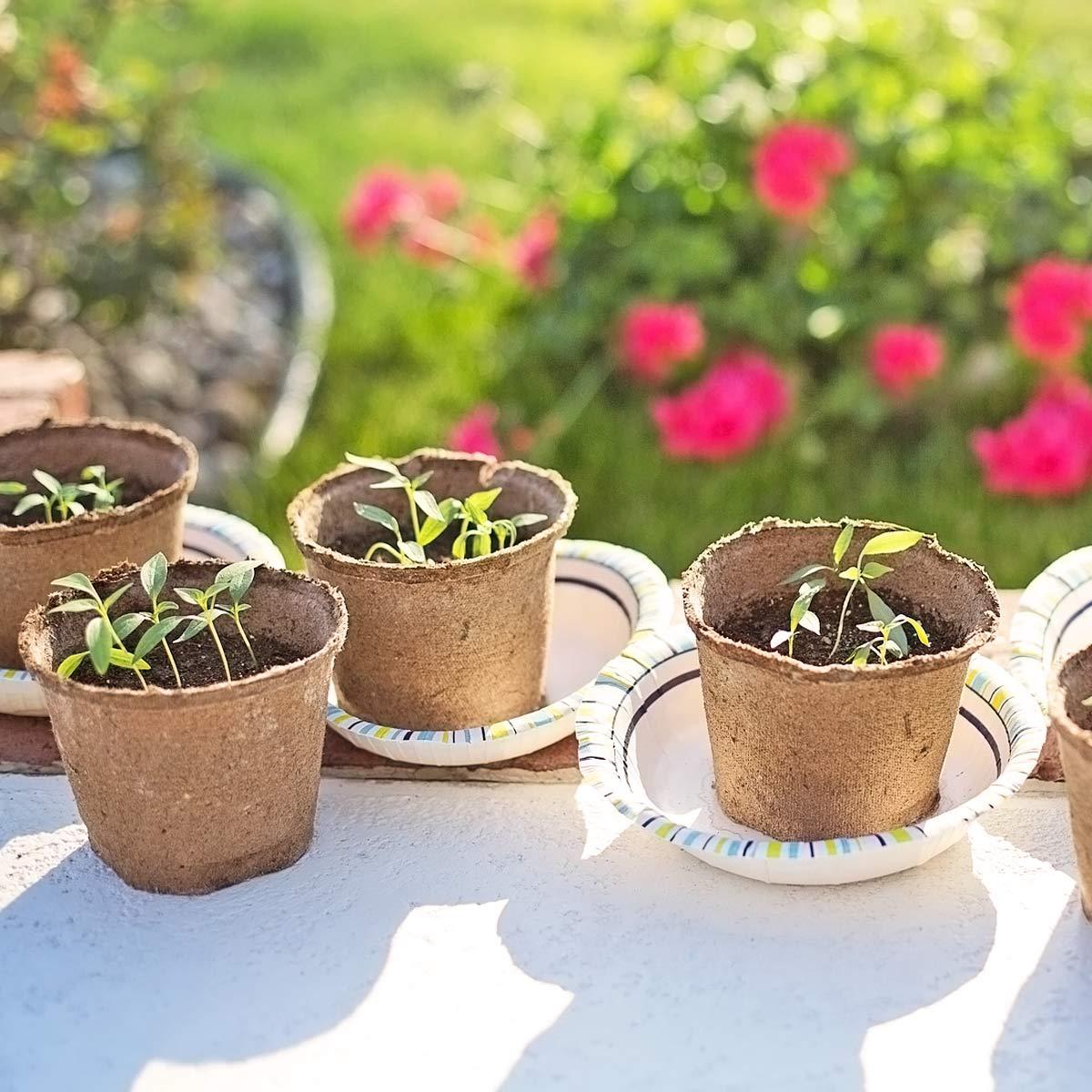 Acheter Le Bon Matériel Pour Le Potager Et Semis | Jardins ... pour Acheter Un Jardin Potager