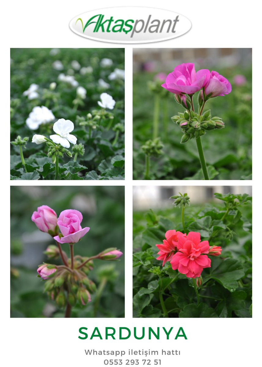 Aktaş Plant Group (@duvarbahce) | טוויטר avec Botanic Salon De Jardin