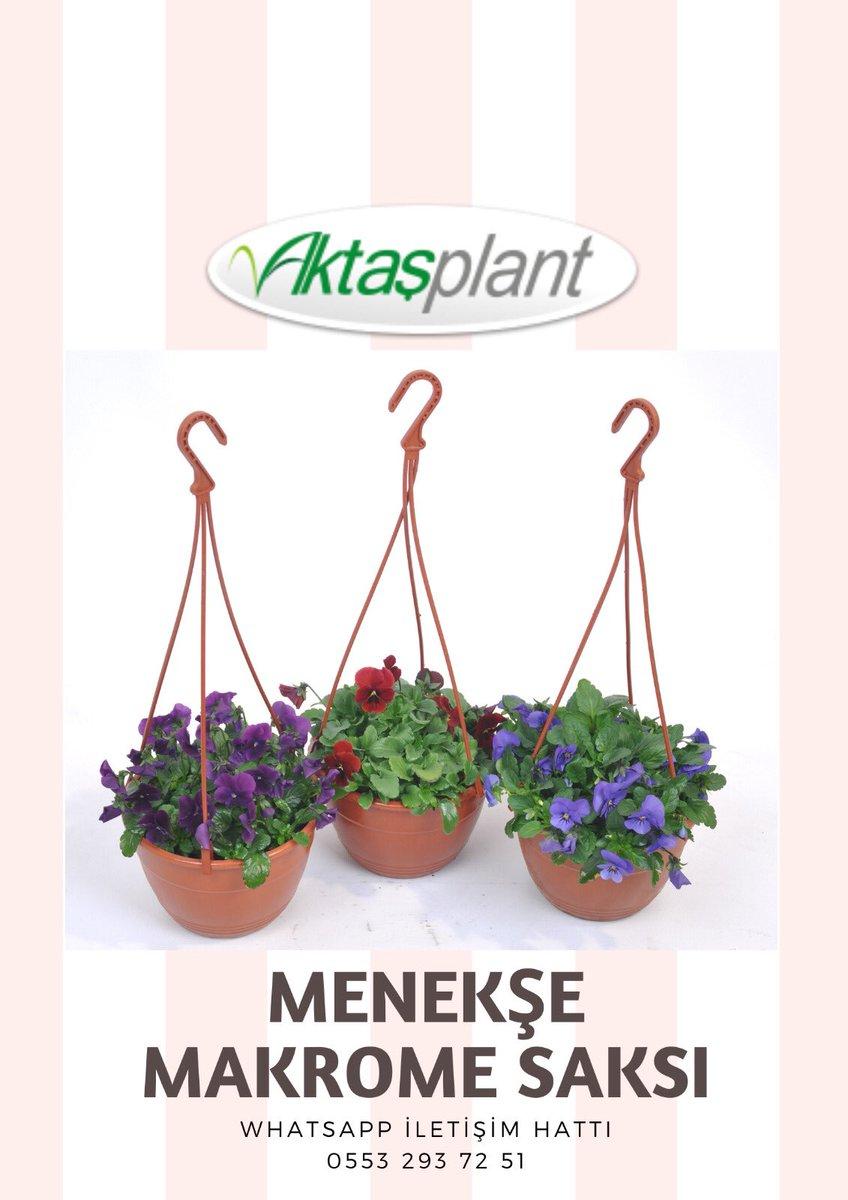 Aktaş Plant Group (@duvarbahce) | טוויטר tout Botanic Salon De Jardin