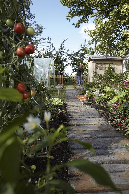 Allée En Pierres Pour Le Jardin Imitation Bois   Leroy Merlin tout Allée De Jardin En Bois