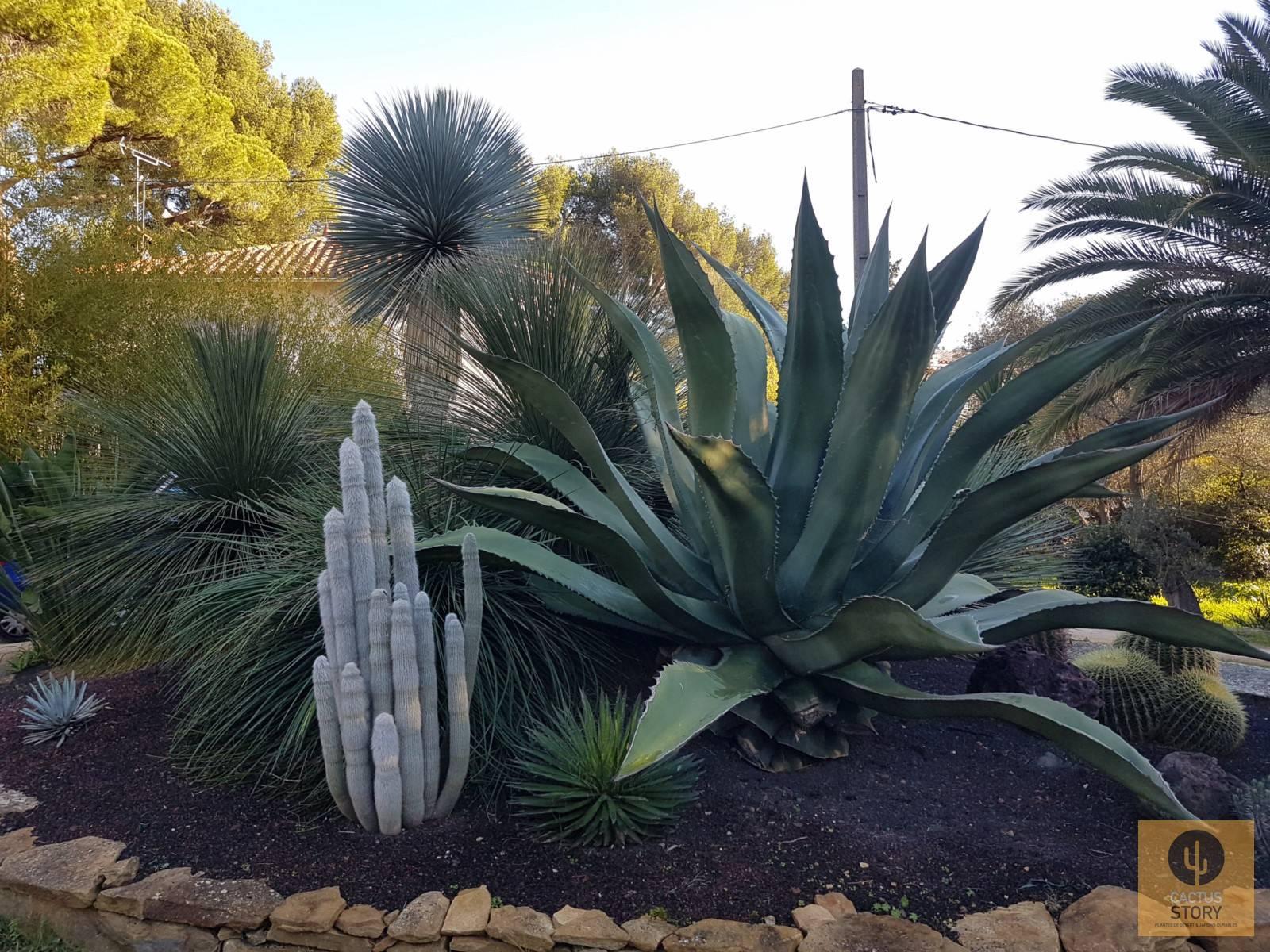 Aménagement D'un Jardin Sec Rocaille - Vente De Cactus Et ... dedans Creer Un Jardin Sec