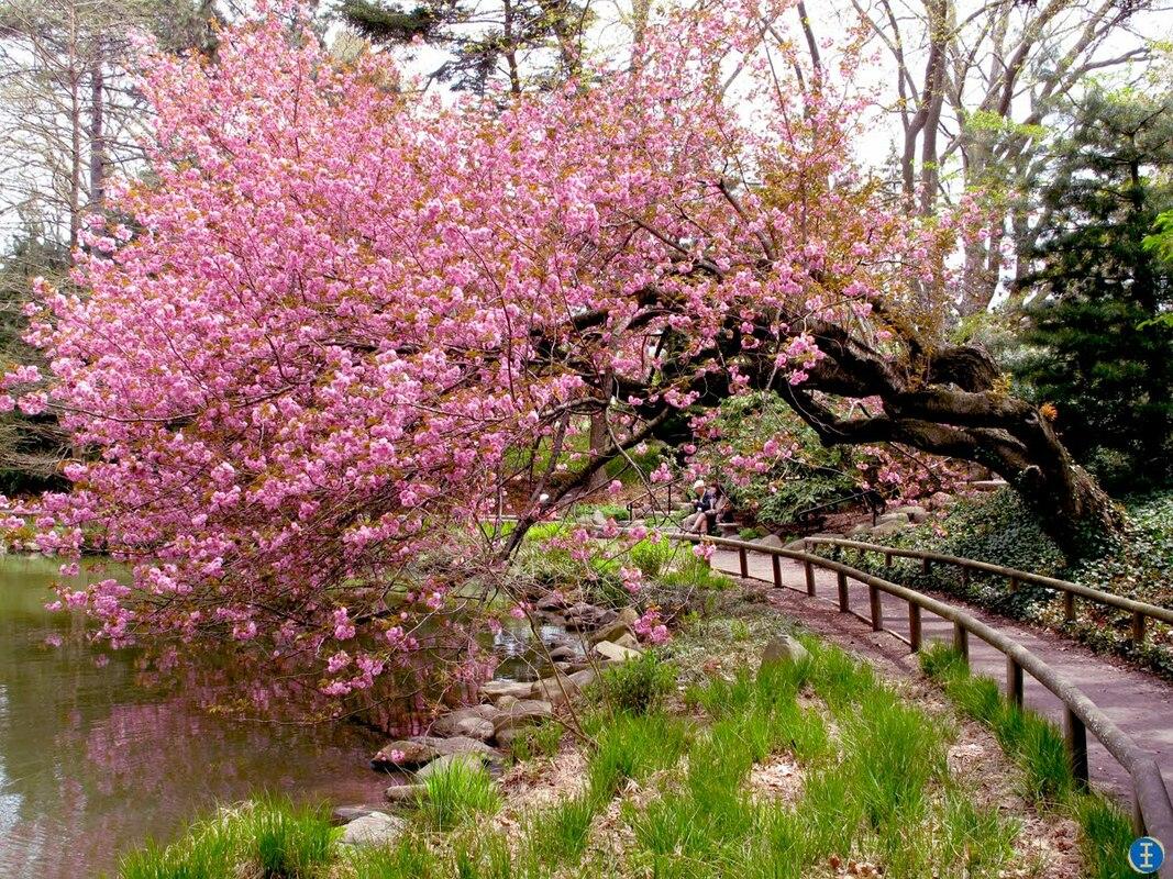 Aménager Un Jardin Zen - Décoration D'intérieur, Coaching ... encequiconcerne Plante Jardin Zen