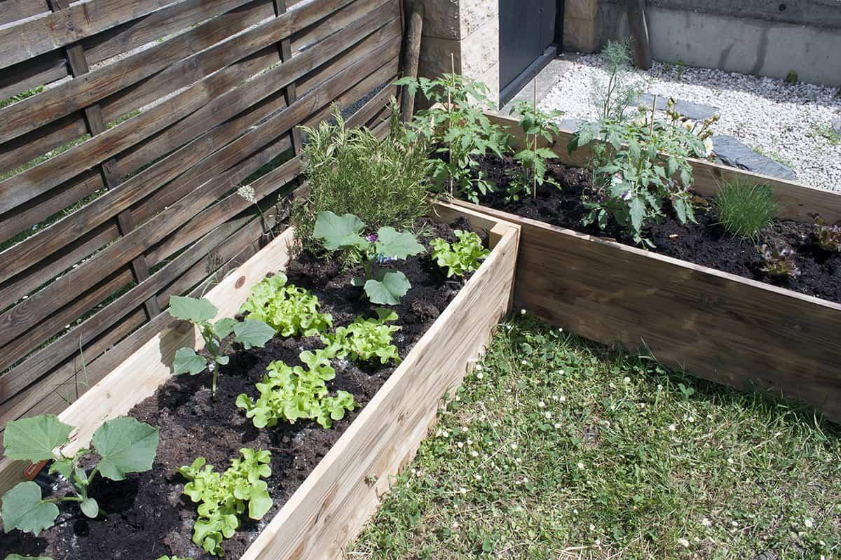 Apprendre À Fabriquer Un Carré Potager Autour D'un Diy pour Fabriquer Un Jardin En Hauteur