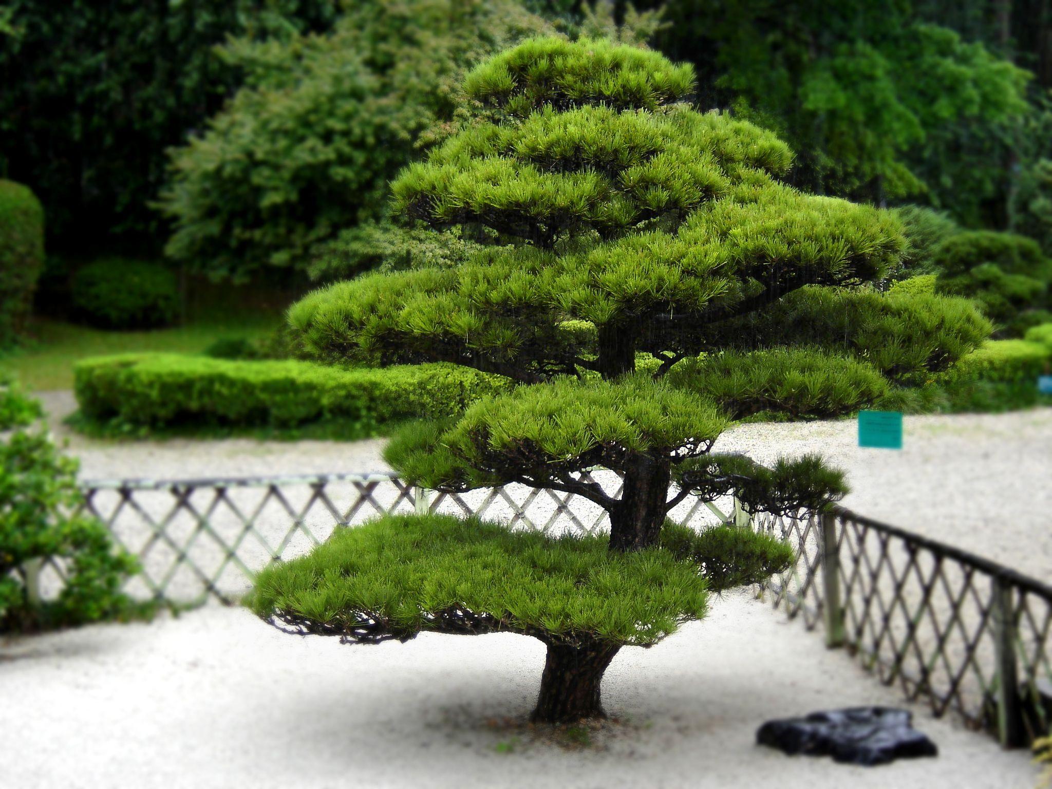 Arbuste Pour Jardin Japonais - Deco Maison Design   Jardin ... serapportantà Arbustes Decoration Jardin
