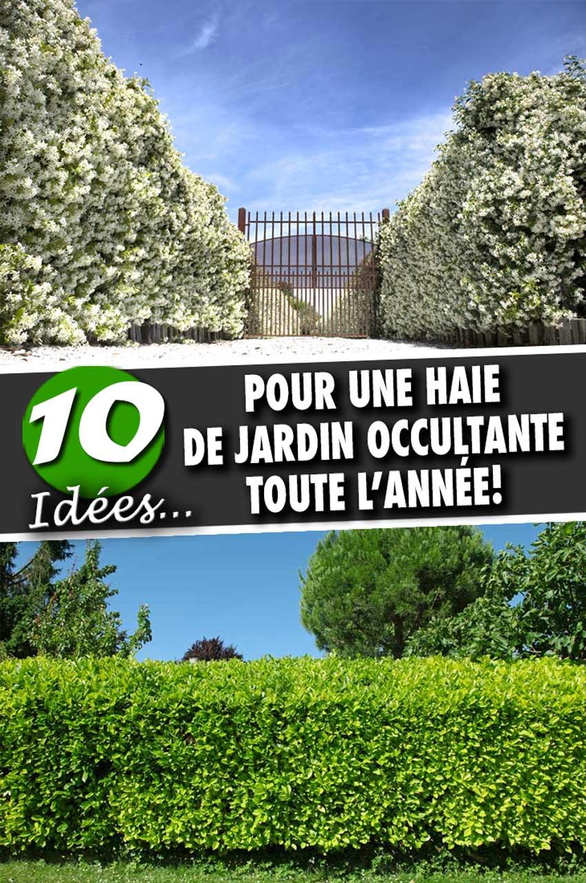 Arbustes Pour Haie De Jardin Occultante: En Voici 10 Au ... dedans Arbustes Decoration Jardin