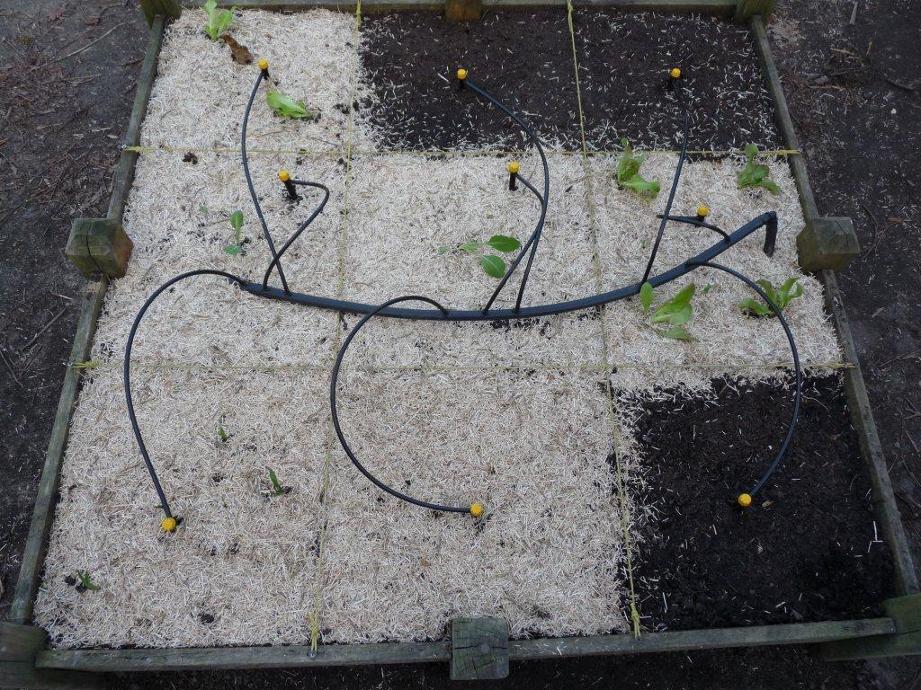 Arrosage Automatique Du Potager En Carrés - Mon Potager En ... dedans Systeme Arrosage Jardin Potager