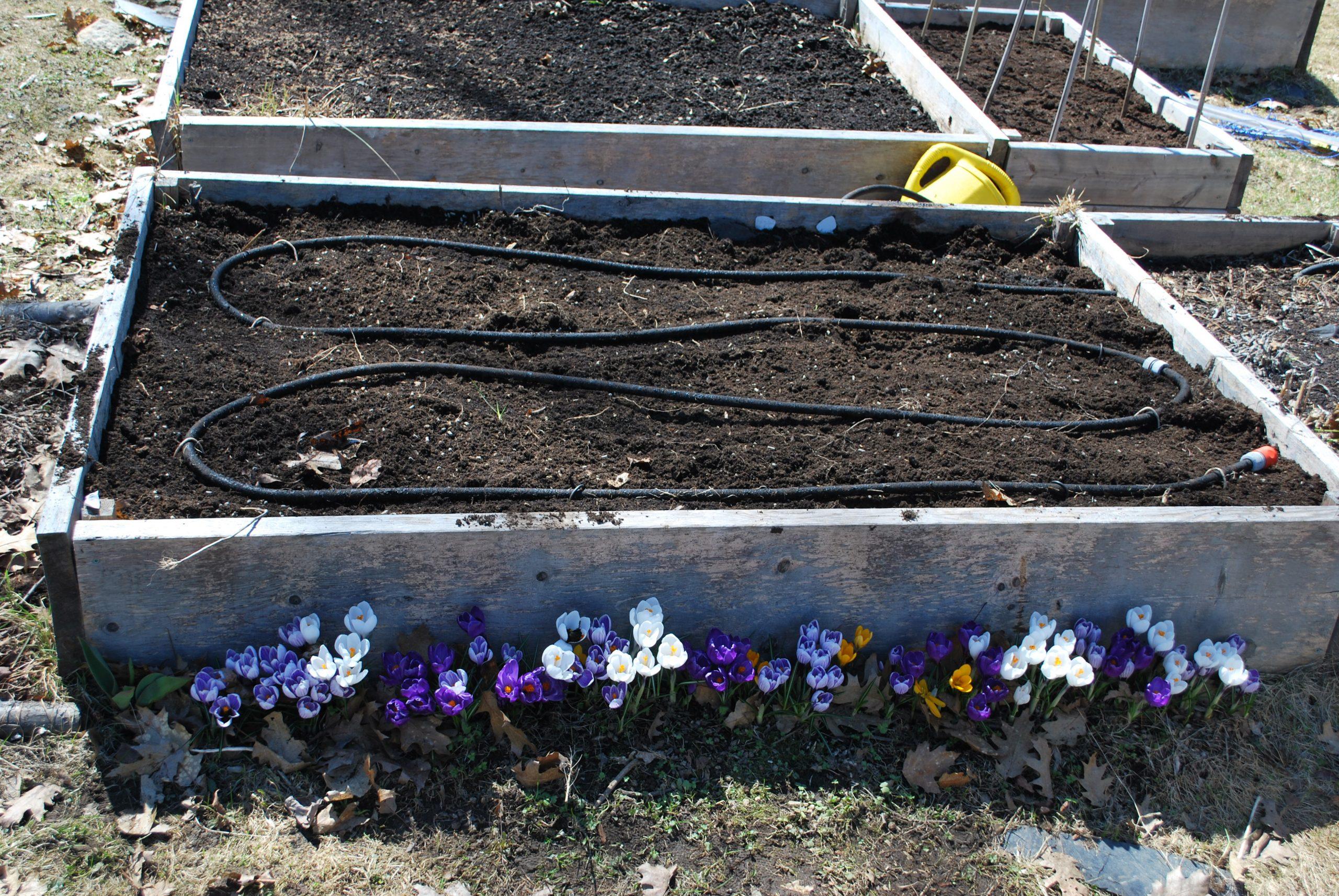 Arroser Le Potager   Potager Biologique tout Systeme Arrosage Jardin Potager