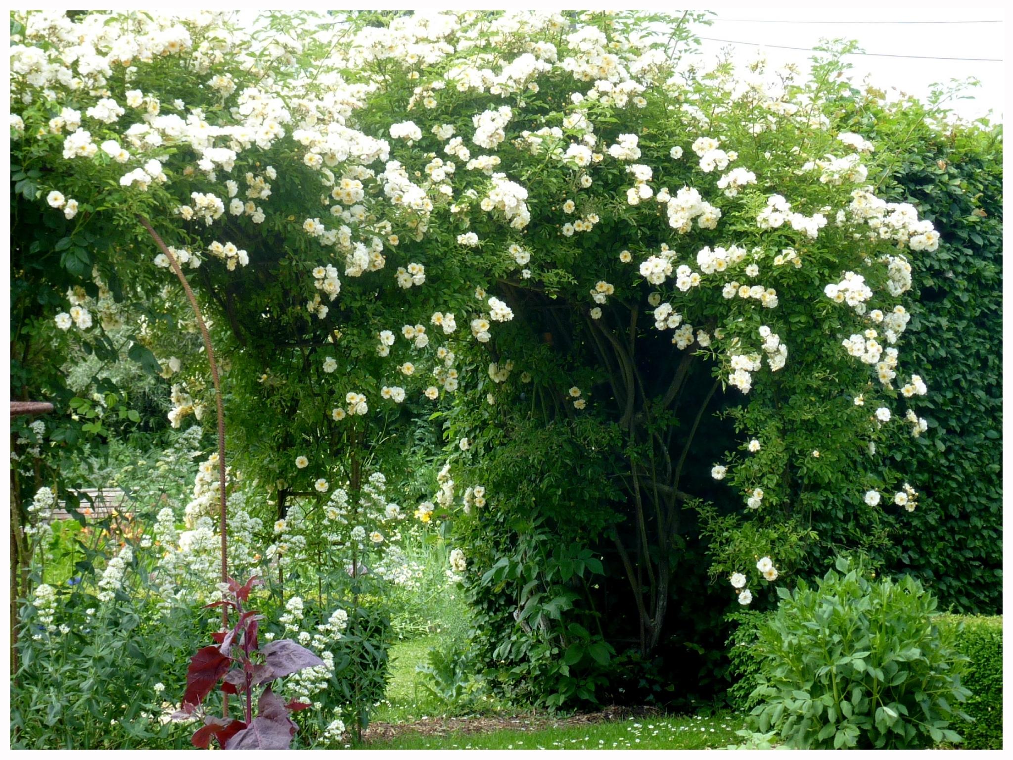 Au Hasard Du Jardin - Le Jardin Par Passion... destiné Cabanne De Jardin