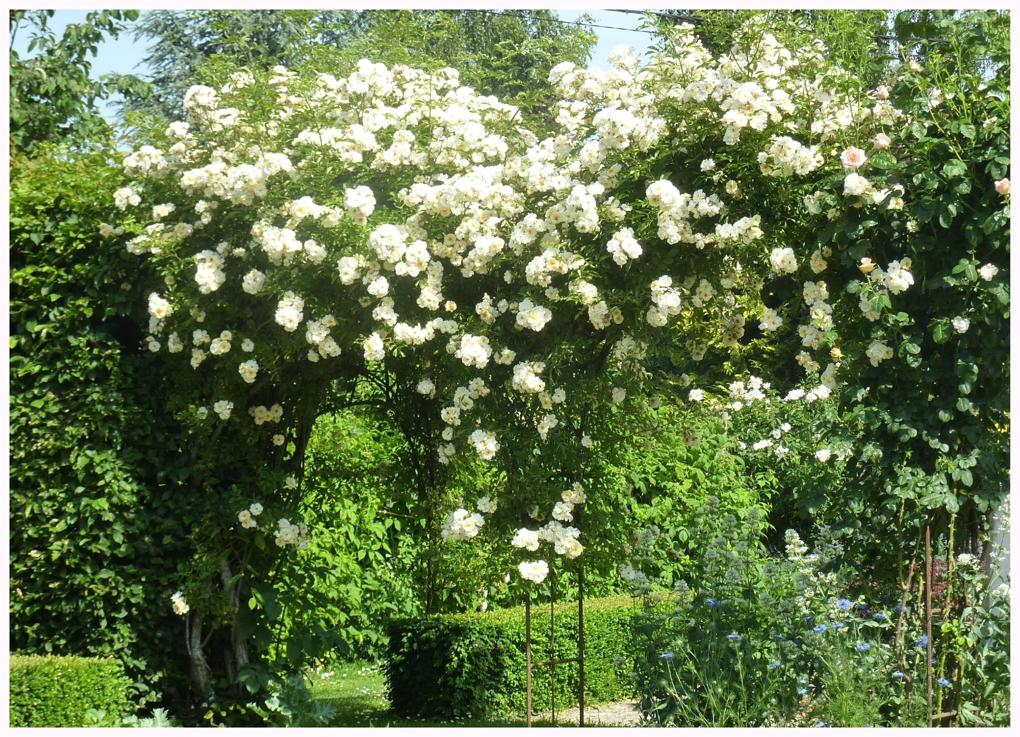 Au Hasard Du Jardin - Le Jardin Par Passion... pour Cabanne De Jardin