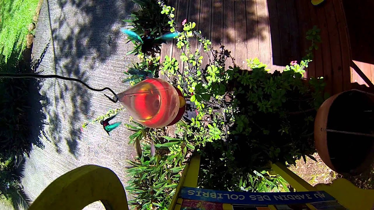 Au Jardin Des Colibris Deshaies Guadeloupe ... Hotel De Charme destiné Au Jardin Des Colibris