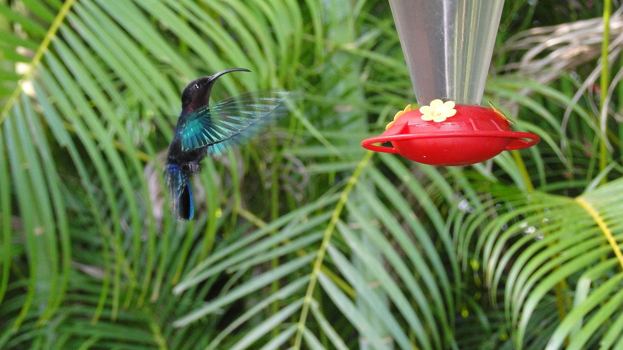 Au Jardin Des Colibris Ecolodge&spa - Updated 2020 Prices ... destiné Au Jardin Des Colibris