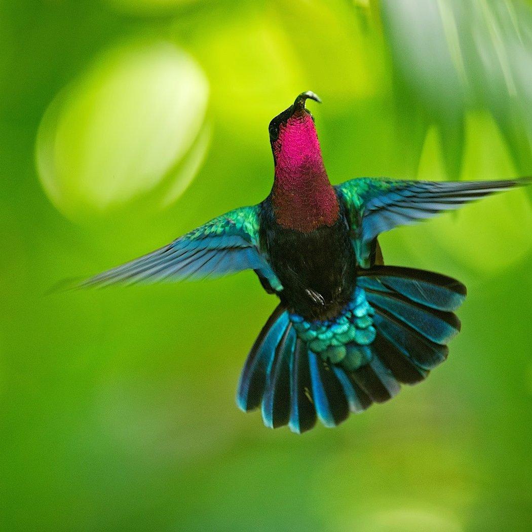Au Jardin Des Colibris - Guadeloupe (@jardin_Colibris)   Twitter destiné Au Jardin Des Colibris