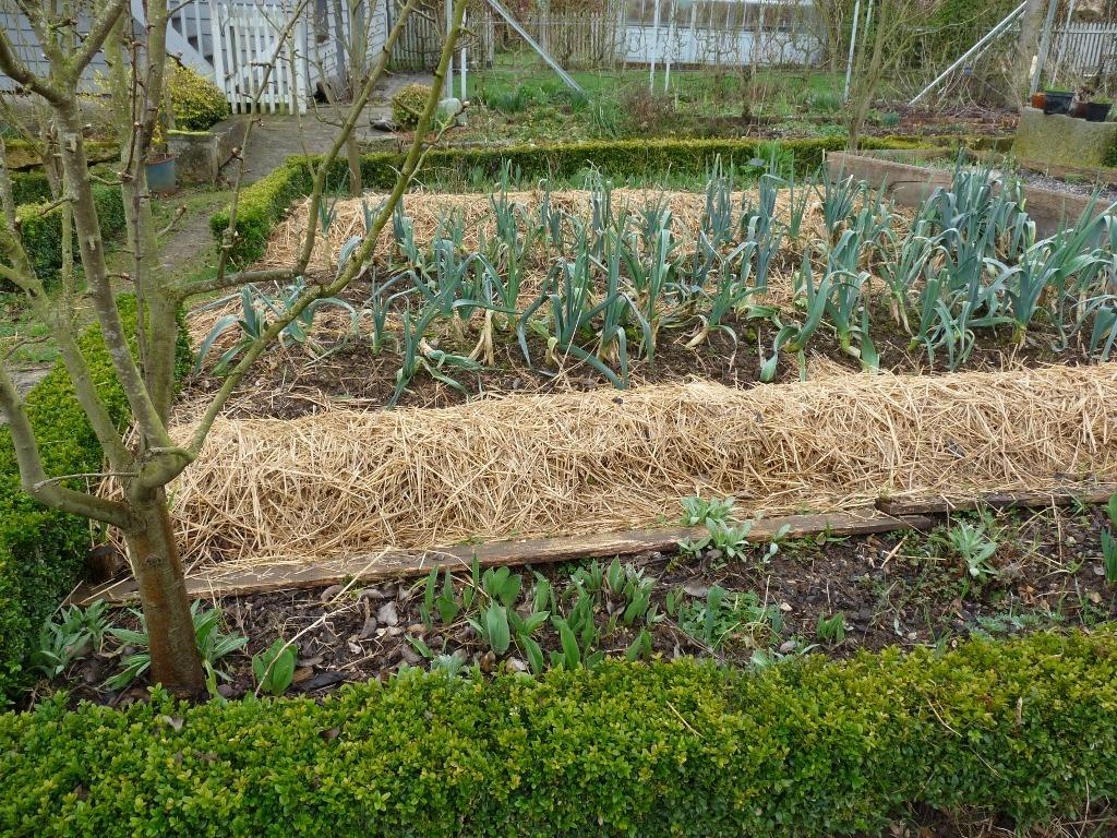 Autonomie Au Jardin. - A.r.t. Survie concernant Organisation D Un Jardin Potager