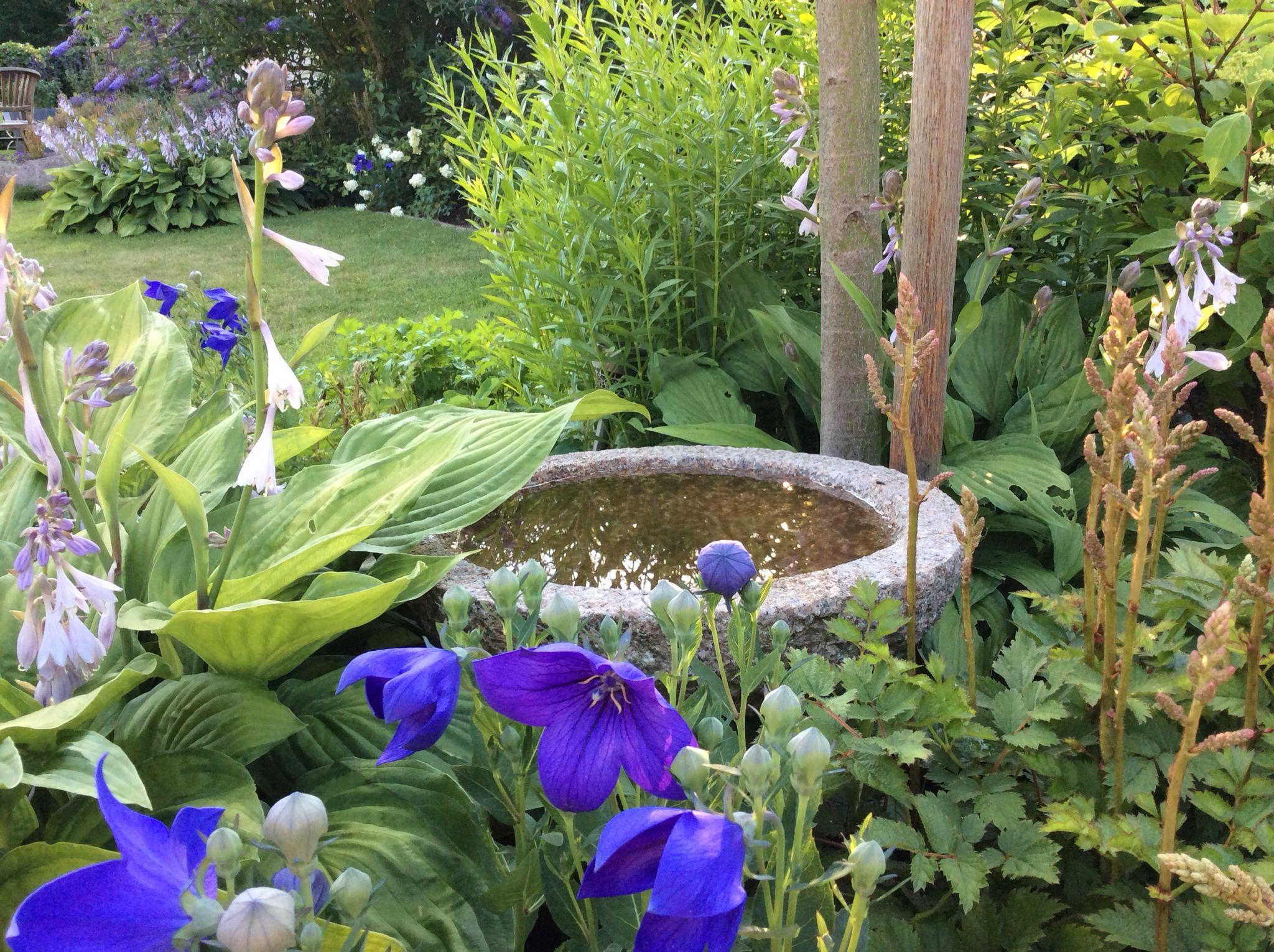 Autre Idée De Réceptacle D'eau | Jardins, Conifères, Copeaux ... intérieur Copeaux De Bois Jardin