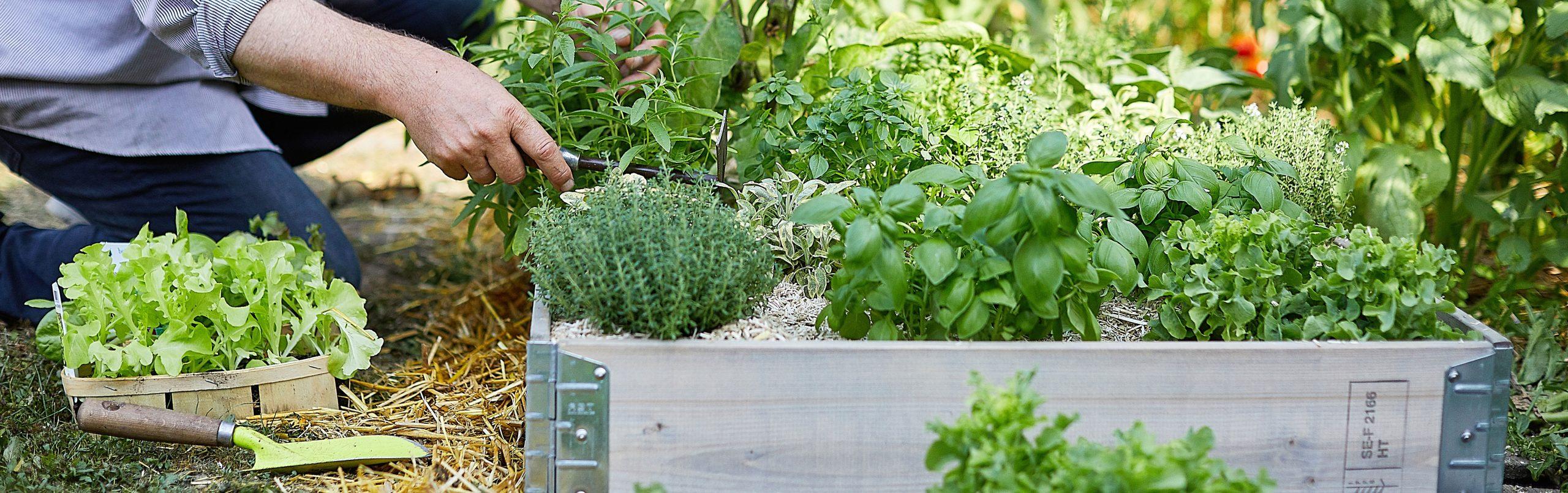 Bac À Potager Et Jardinière Sur Pieds : Botanic®, Carré ... tout Acheter Un Jardin Potager