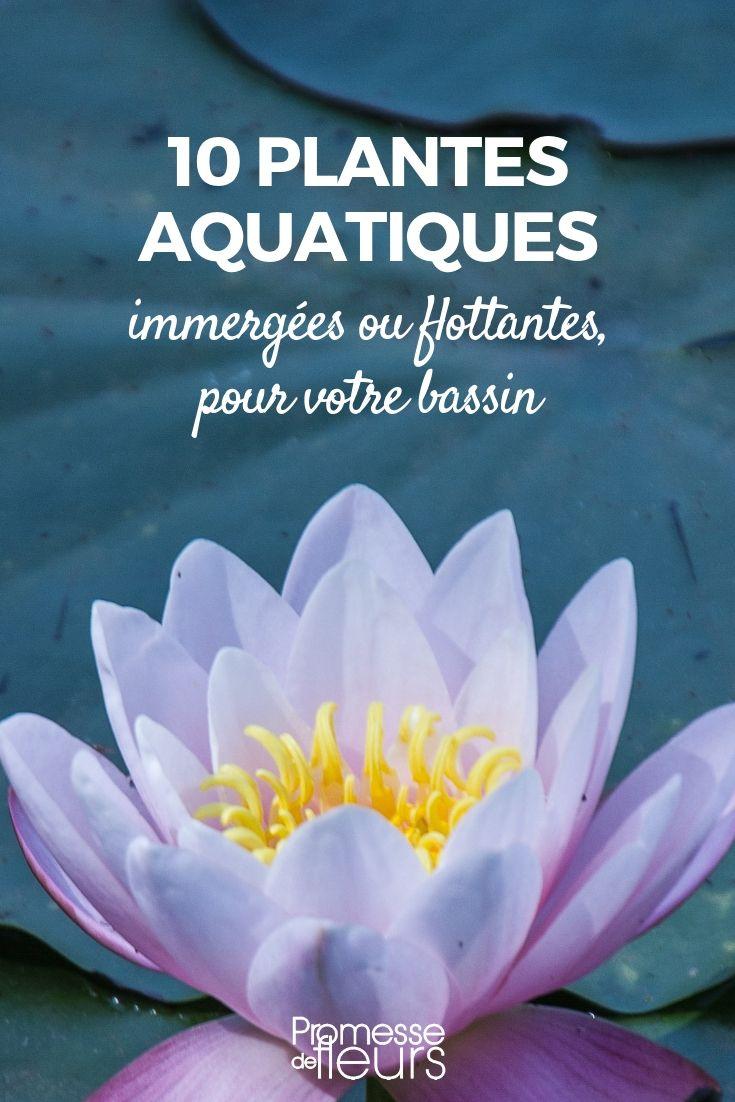 Bassin : 10 Plantes Aquatiques, Immergées Ou Flottantes ... pour Plante Bassin De Jardin