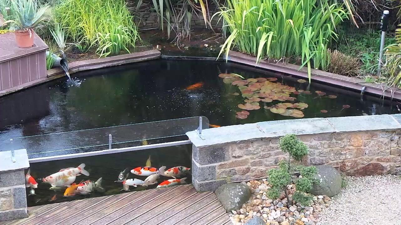 Bassin De Jardin Avec Vitre concernant Bassin De Jardin Hors Sol