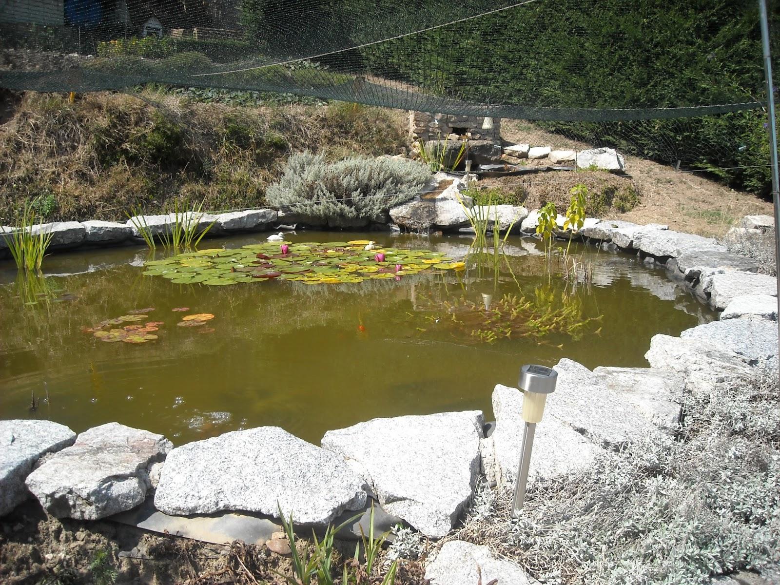 Bassin De Jardin Créer Un Courant D'eau À Moindre Frais concernant Créer Un Bassin De Jardin