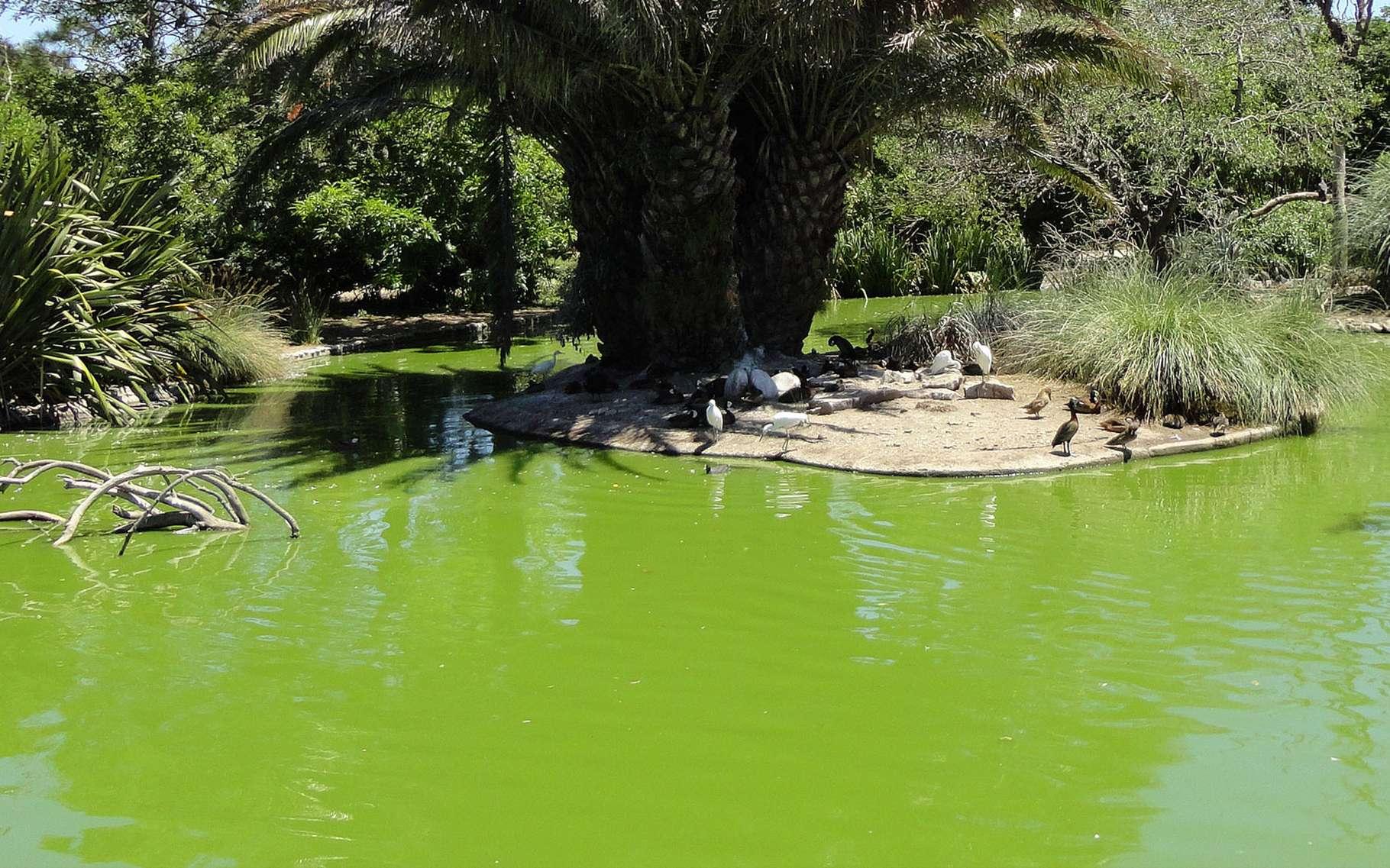 Bassin De Jardin : Quelles Dimensions ? | Dossier à Profondeur D Un Bassin De Jardin