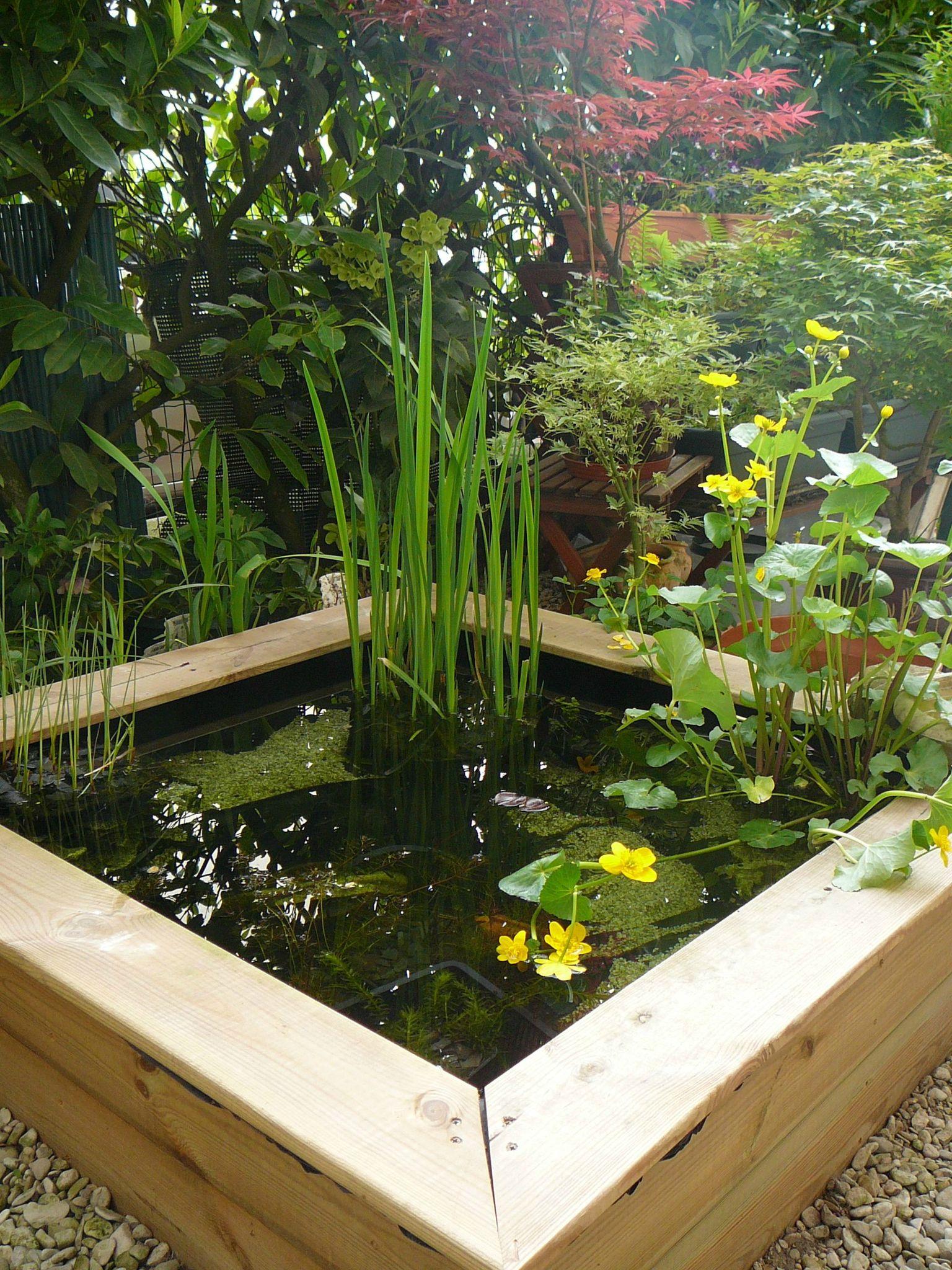 Bassin Poisson Terrasse serapportantà Bassin De Jardin Pour Poisson