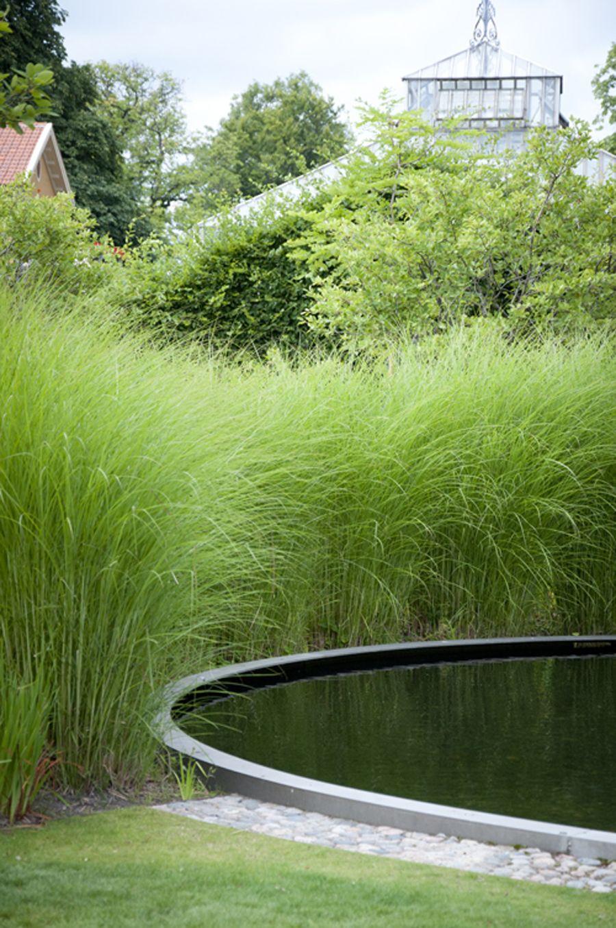 Bassin Rond Noir Et Miscanthus Sinensis 'gracillimus' En ... pour Bache Noire Jardin