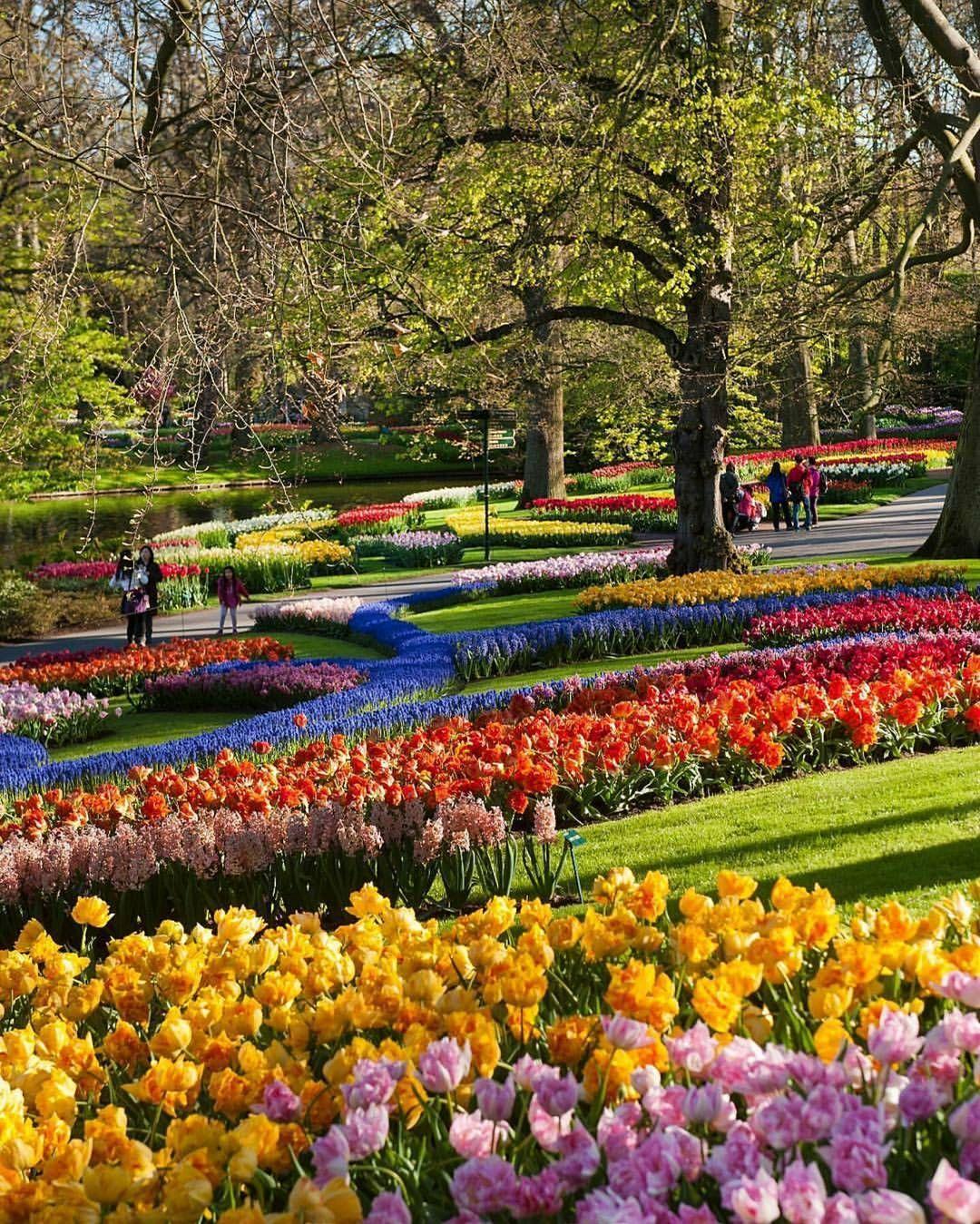 Beautiful Flowers During The Tulip Bloom At Keukenhof ... intérieur Jardin De Keukenhof