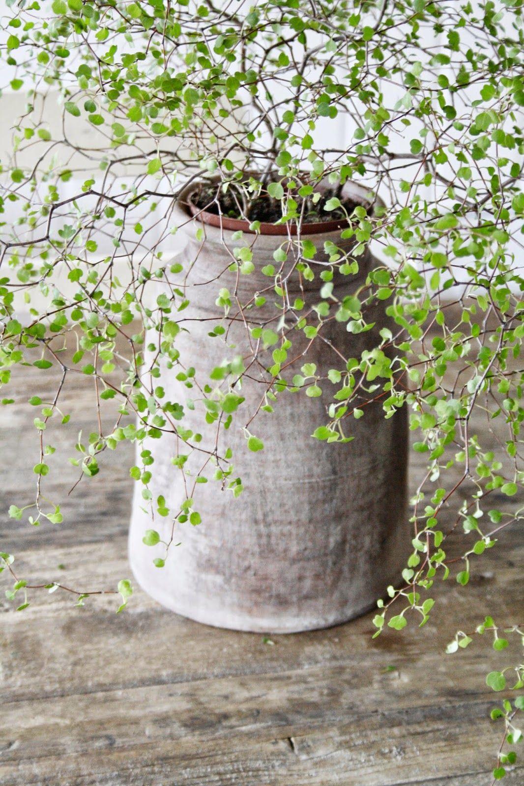 Beautiful Grey Ceramic Vase With A Nature Touch. | Planten ... concernant Plante Jardin Zen