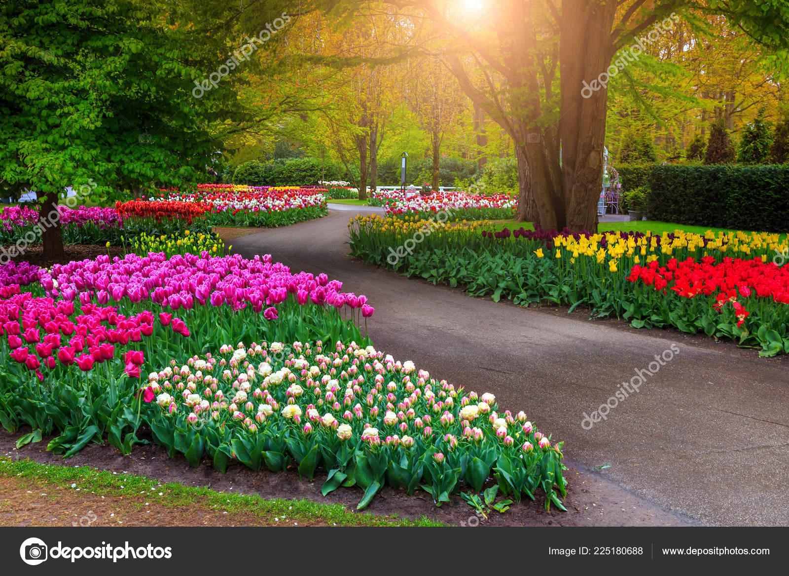 Beautiful Spring Landscape Fabulous Keukenhof Garden ... avec Jardin De Keukenhof
