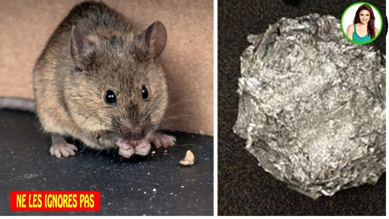 Bicarbonate De Soude Pour Empêcher Les Souris Et Les Rats D ... destiné Comment Se Débarrasser Des Rats Dans Le Jardin