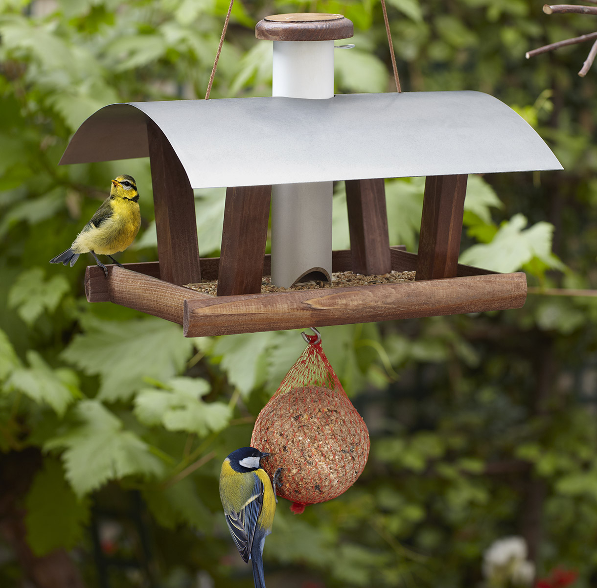 Bien Nourrir Les Oiseaux Du Jardin - Détente Jardin avec Abri Oiseau Jardin