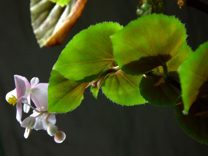 Blanche Et Pure Fotoğrafçılık Christian Ragaine Tarafından ... intérieur Plante Jardin Zen